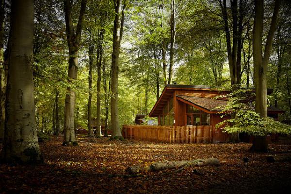 Blackwood Forest cabin