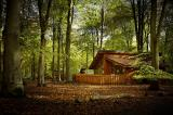 Blackwood Forest cabin
