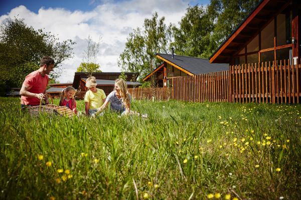enjoy the sunny meadow