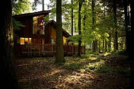 modern wood cabins in the Forest of Dean
