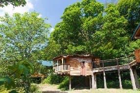 Golden Oak treehouse