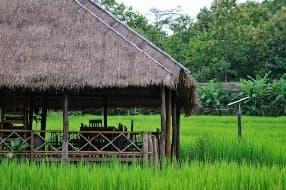 glamping amidst rice paddies
