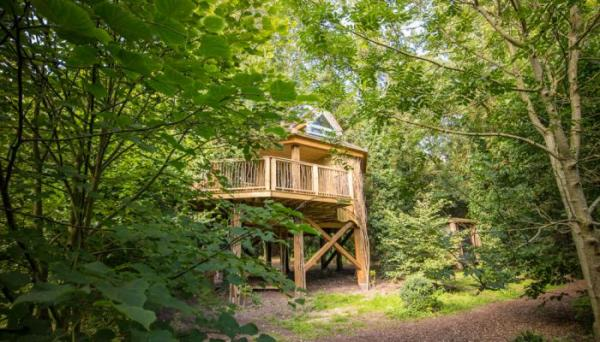 Tilia treehouse in the trees