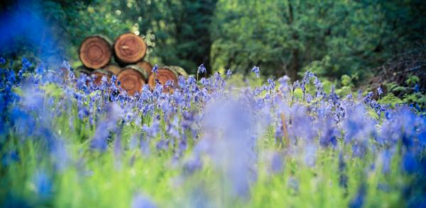 visit while the bluebells are out