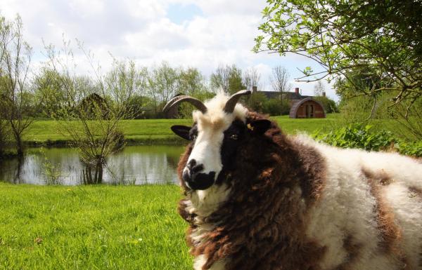 Meet the resident farm animals