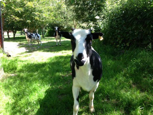 meet the animals around the farm