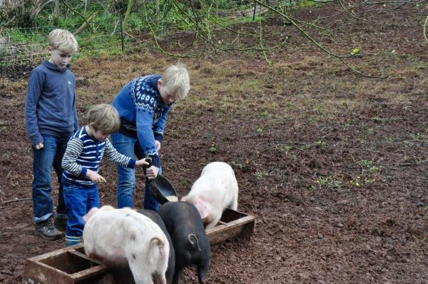 see animals on the farm