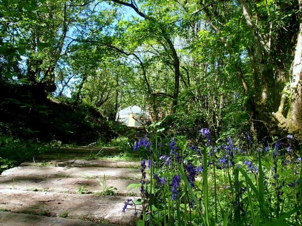 bluebells in the woodland setting