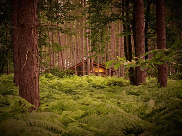 hidden amongst the woodland