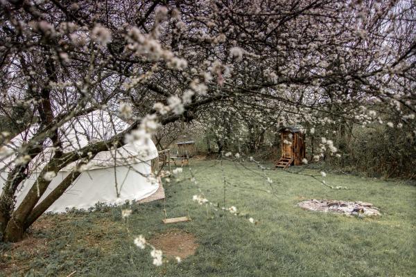 yurt stay at Ceridwen