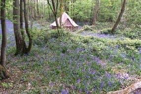 Wild Boar Wood Campsite