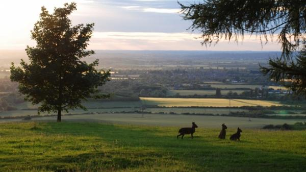 Mara on the Chiltern downs at ZSL Whipsnade Zoo