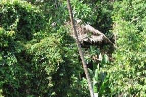 rancho built amongst jungle