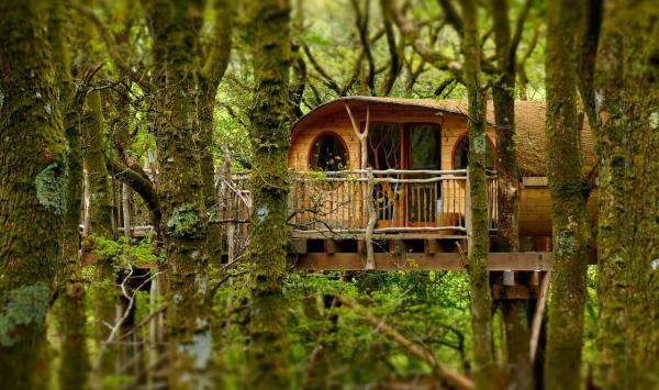 Unique Living Room treehouses