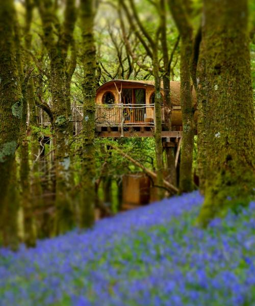 visit when the bluebells are in bloom