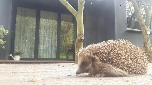 a visitor