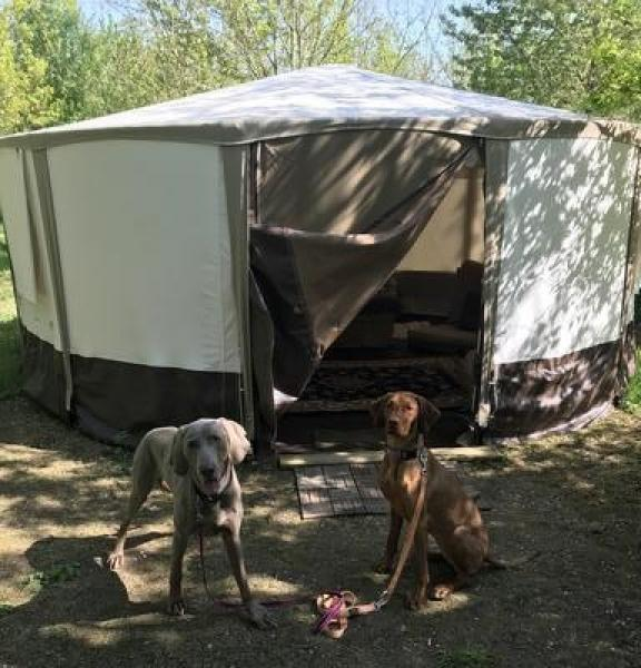 Dogs welcome glamping