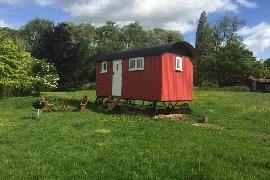 Thyme Shepherds Hut