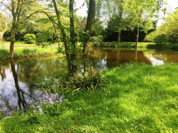 Willow Cottage pond