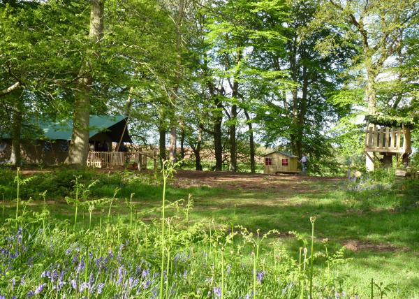 Woodland Camp in May in the height of the bluebell season