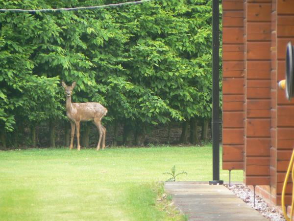 wildlife around the cabin
