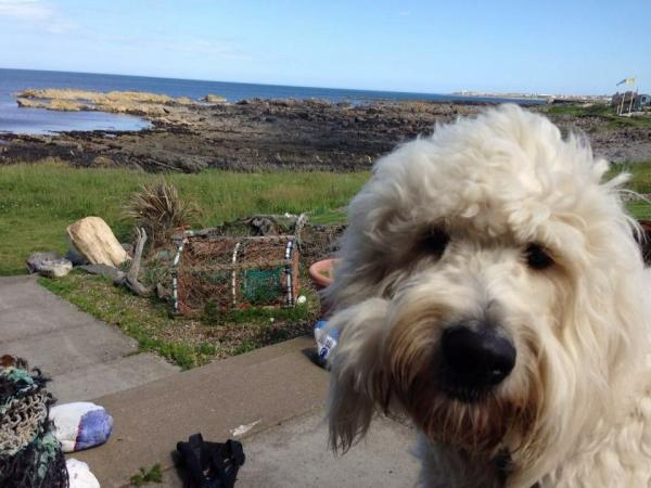 dog enjoying the seaview location