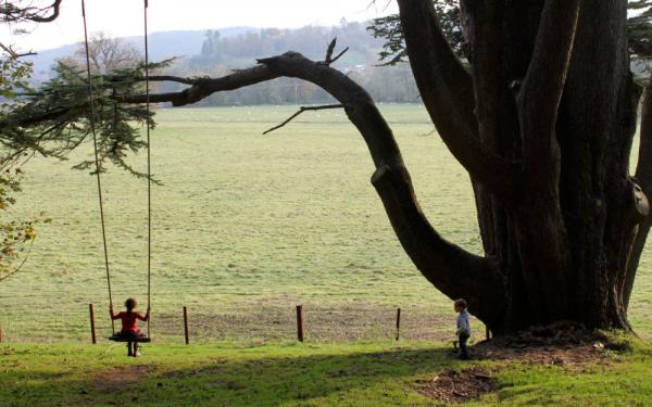 rope swing at property