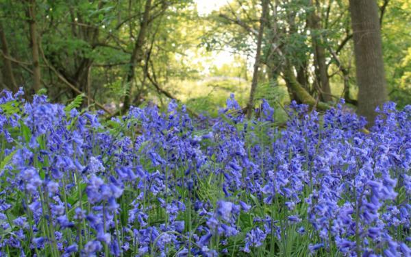 stay in bluebell season