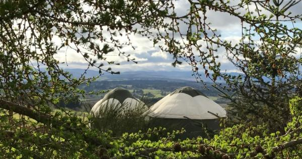 Yurts nestled in nature