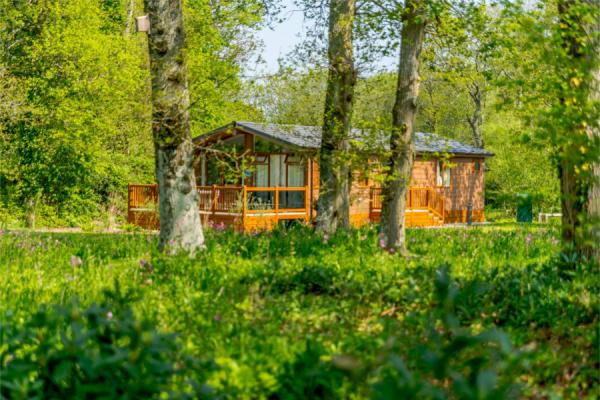 Holiday Lodges in Wareham Forest