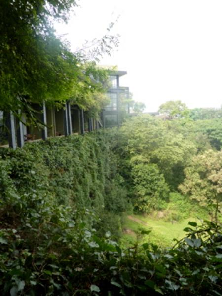 hotel amidst jungle