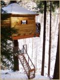 treehouse with trunk inside