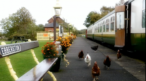 hens on the platform