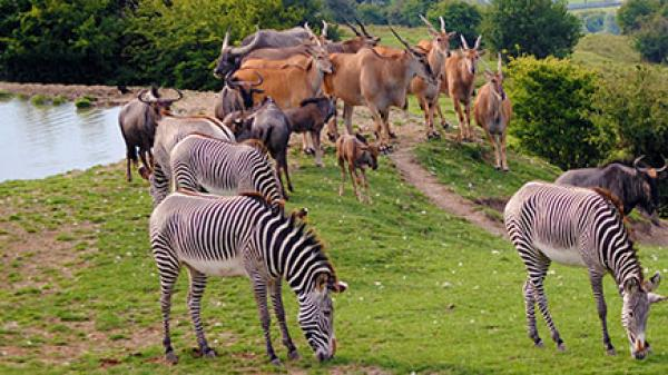 safari experience in Kent