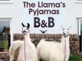 llama treks offered
