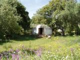 yurt in meadow