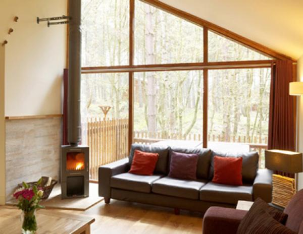large windows bring the forest in