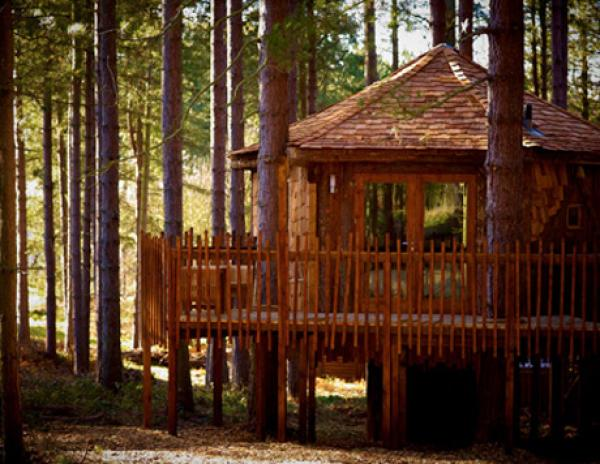large treehouse accommodation