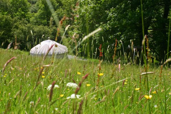 Summer flowers by the yurt